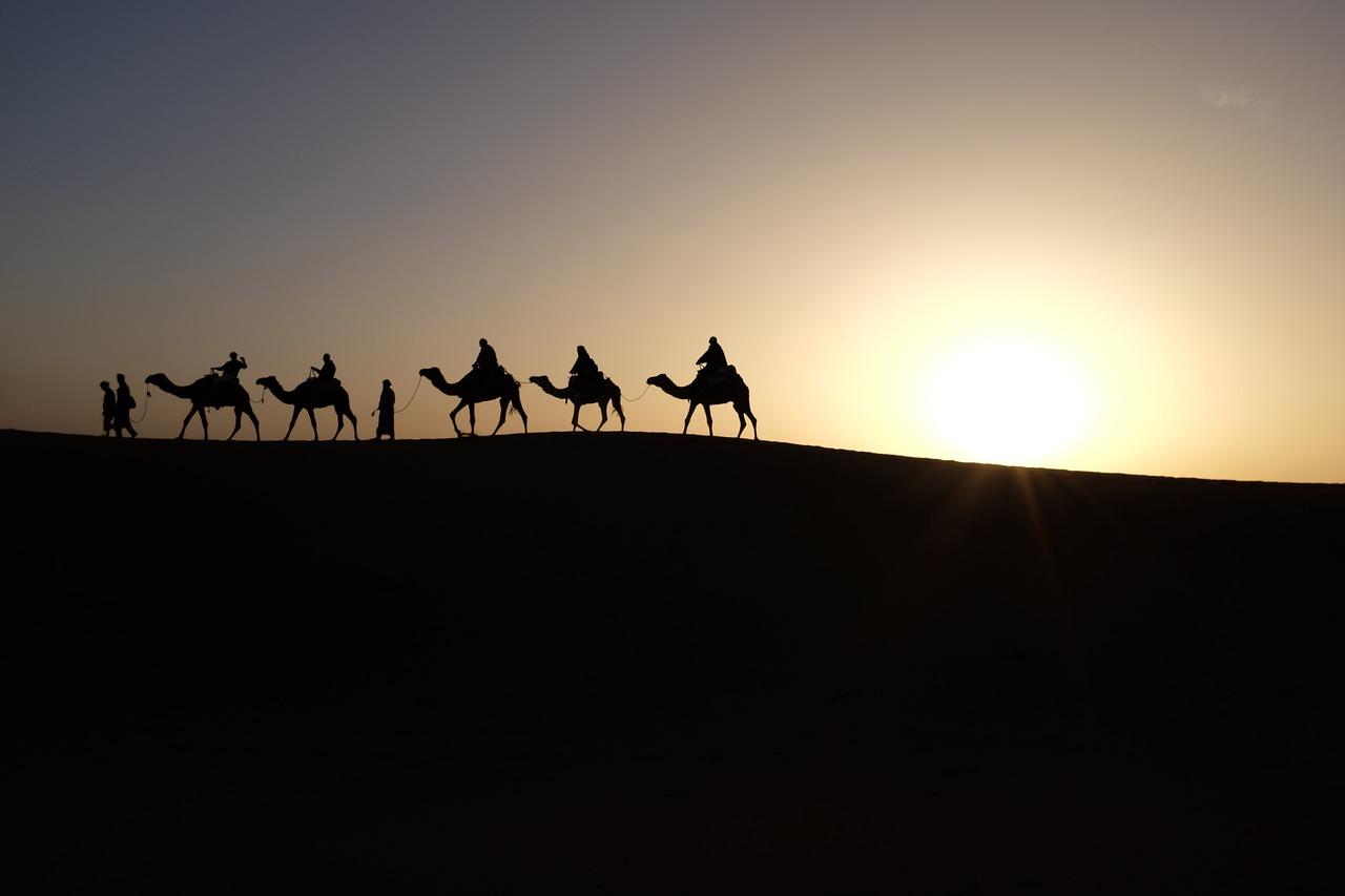 cosas que no sabias de los camellos