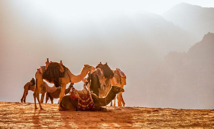 Diferencias entre camellos y dromedarios