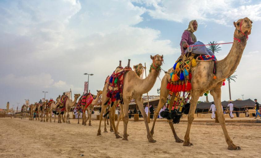 Concurso de belleza en el Festival de Camellos Rey Abdulaziz